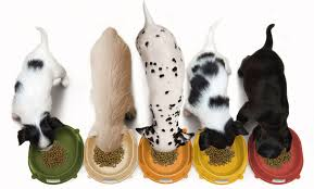 Most Interesting Features of Taste of the wild dry dog food